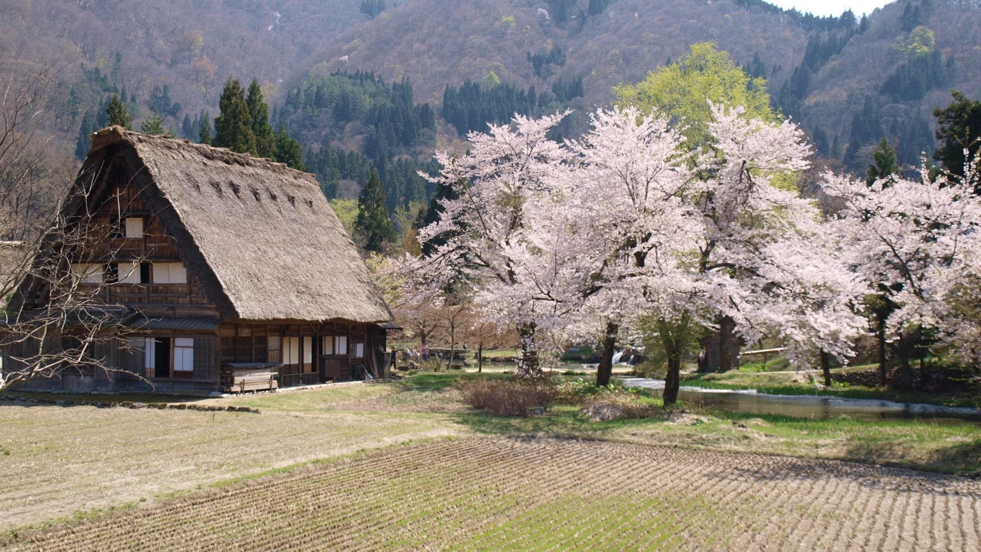 Shirakawago Village in Spring