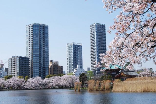 Ueno Park pond view