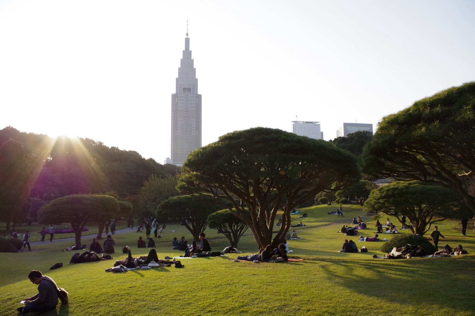 The views of Shinjuku Gyoen Park and skyscraper in Shinjuku