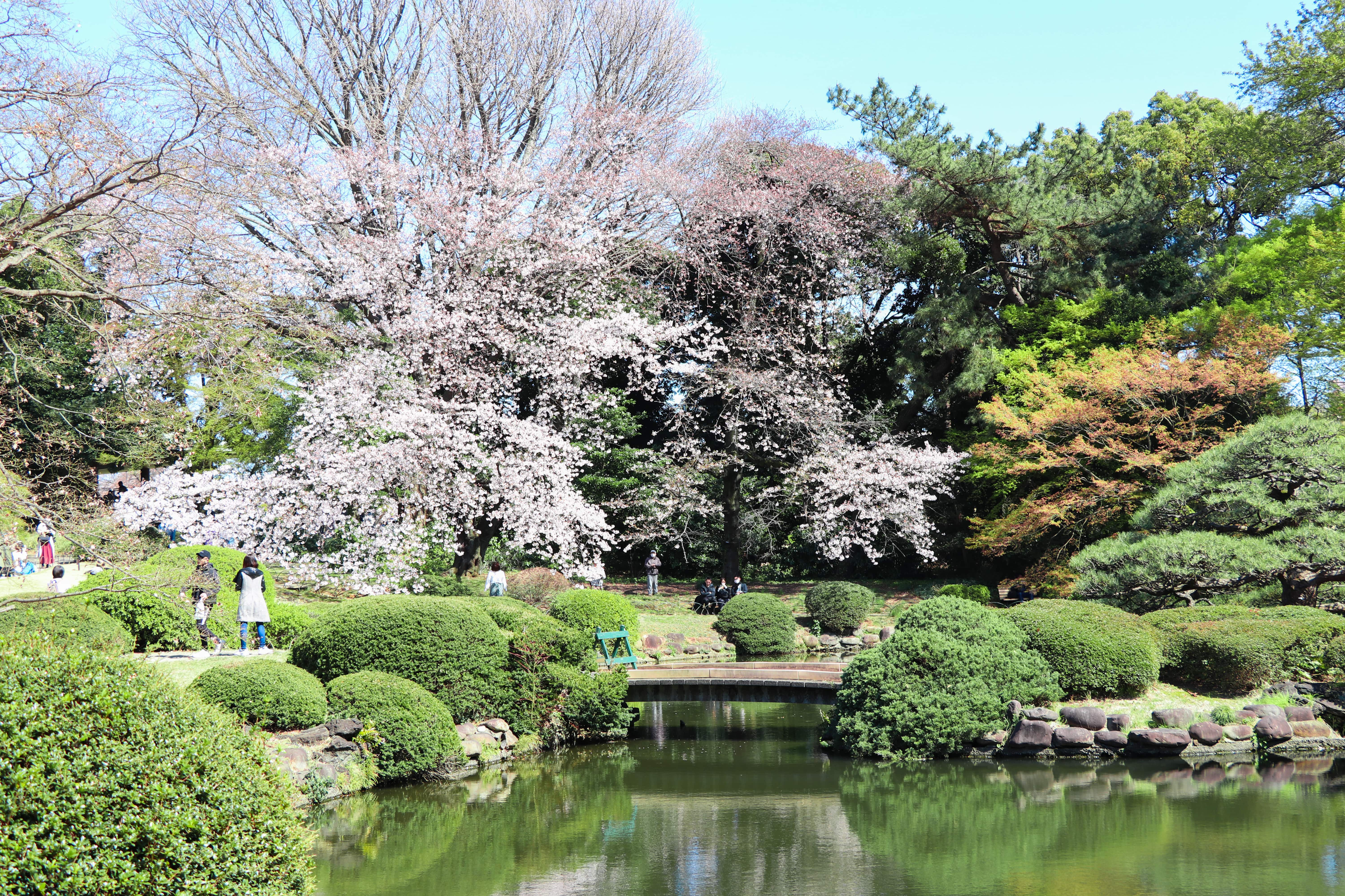Most Beautiful Japanese Gardens in Tokyo