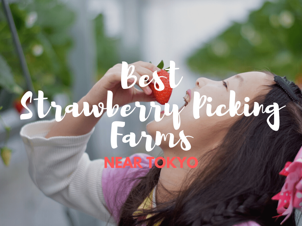6 Best Strawberry Picking Farms near Tokyo in 2019-2020