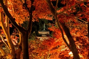 Top 10 Things to Do in Japan in November