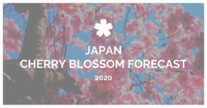 Cherry Blossom Forecast in Japan