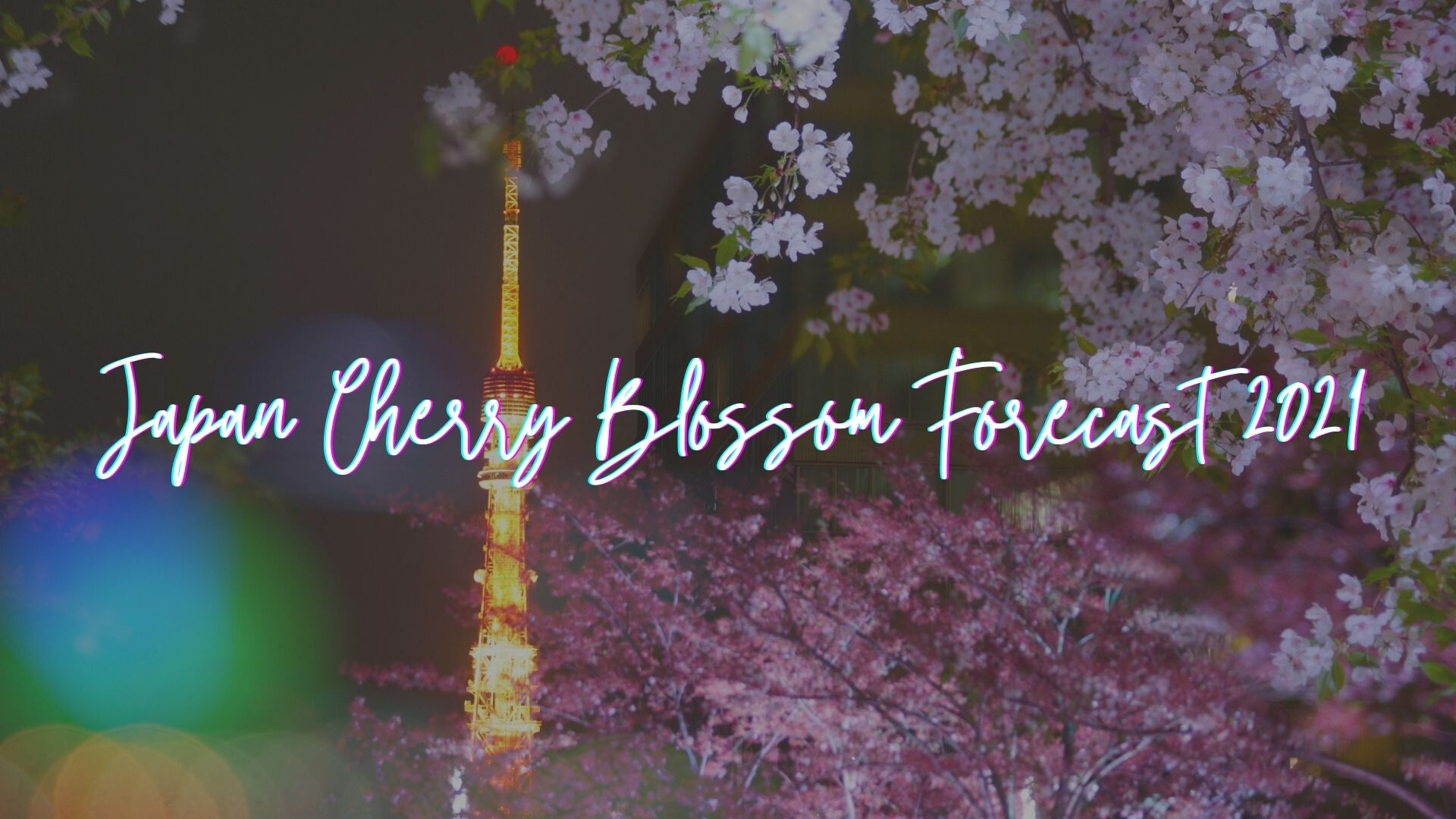 Japan Cherry Blossom Forecast 2021