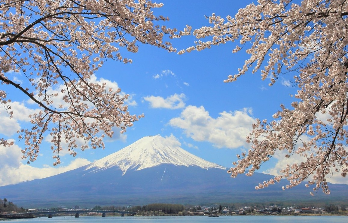 Cherry blossoms with the view of Mt.Fuji