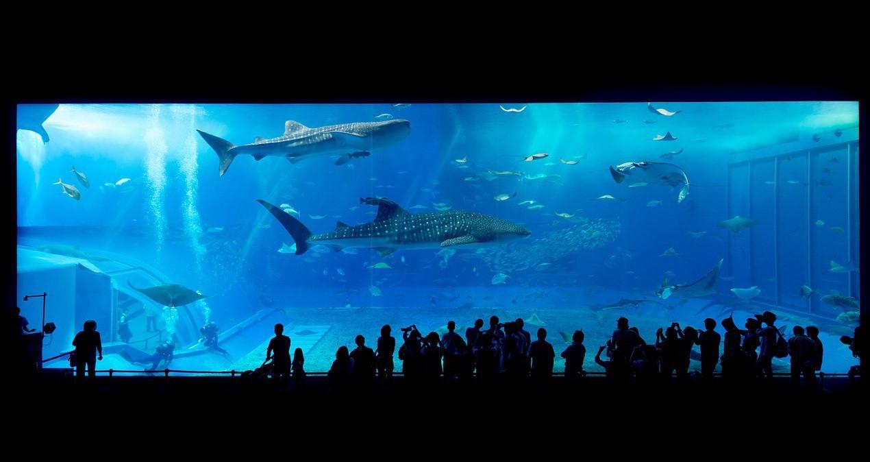 The massive fish tank at Churaumi Aquarium