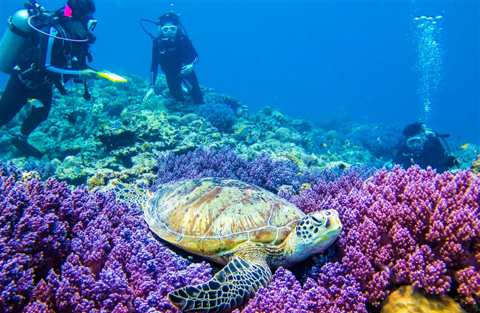 Diving in Okinawa's ocean and seeing colourful corals and a turtle