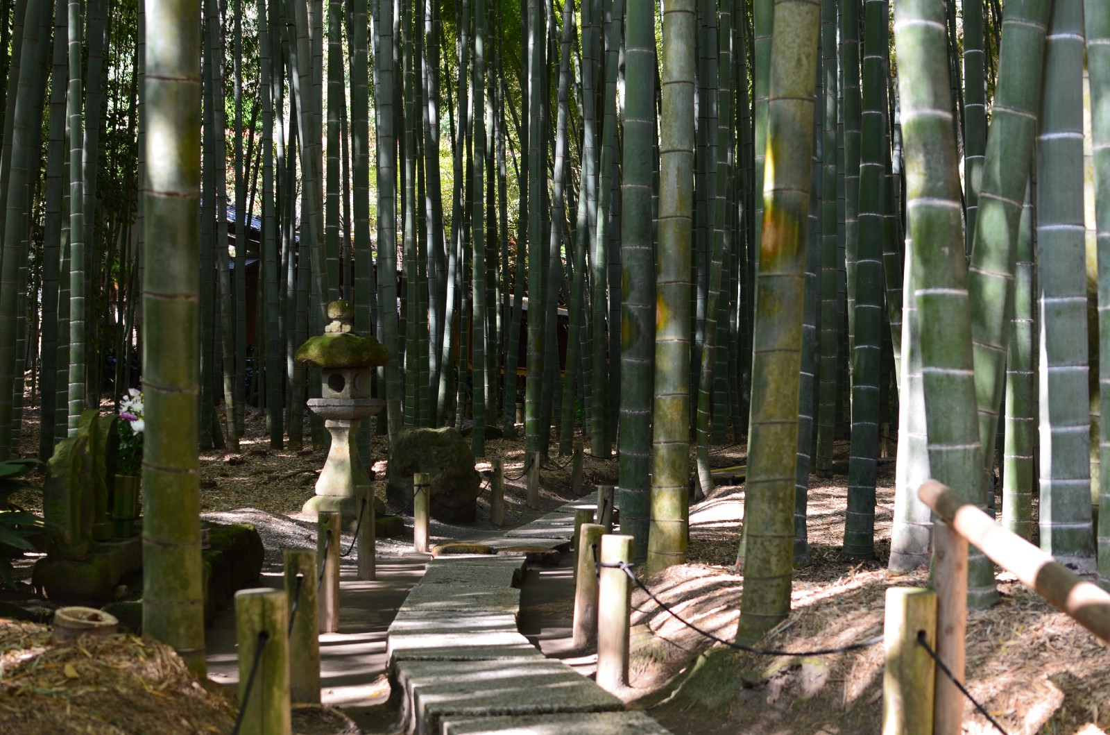 The pleasant path through the bamboo forest at Hokokuji Temple