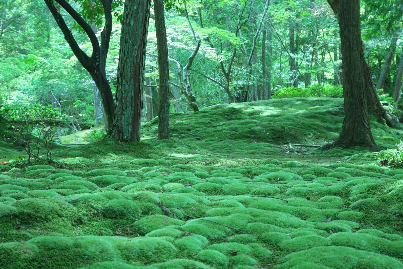 Moss Garden At Saihoji Temple Kyoto Japan Web Magazine