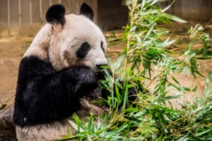 Ueno Zoo: Must Visit Zoological Gardens in Tokyo