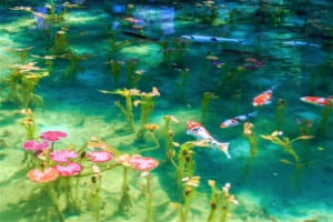 The Mystery Pond In Japan Looks Like Monet's Paintings