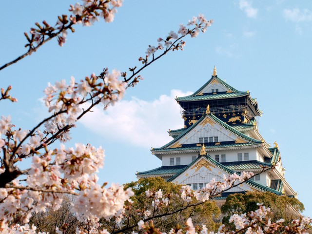 The magnificent Osaka Castle with cherry blossoms