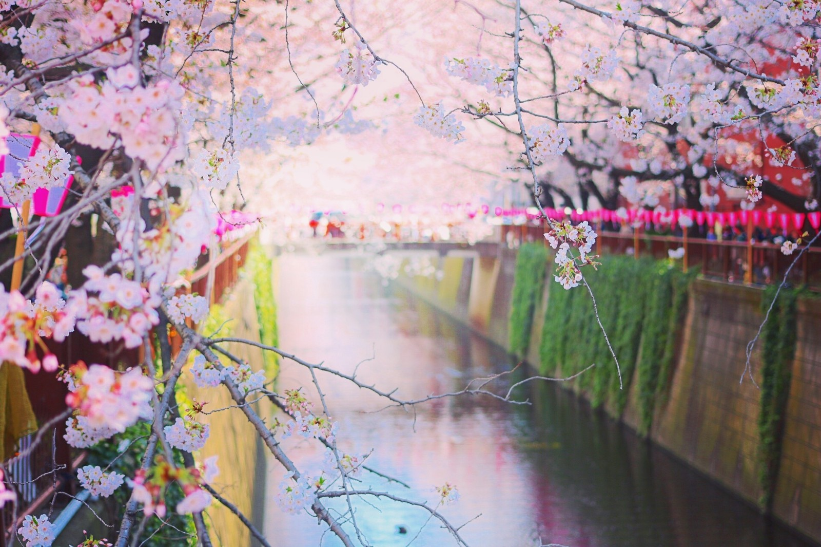 Spring in Japan : 10 Best Things to Do in 2020