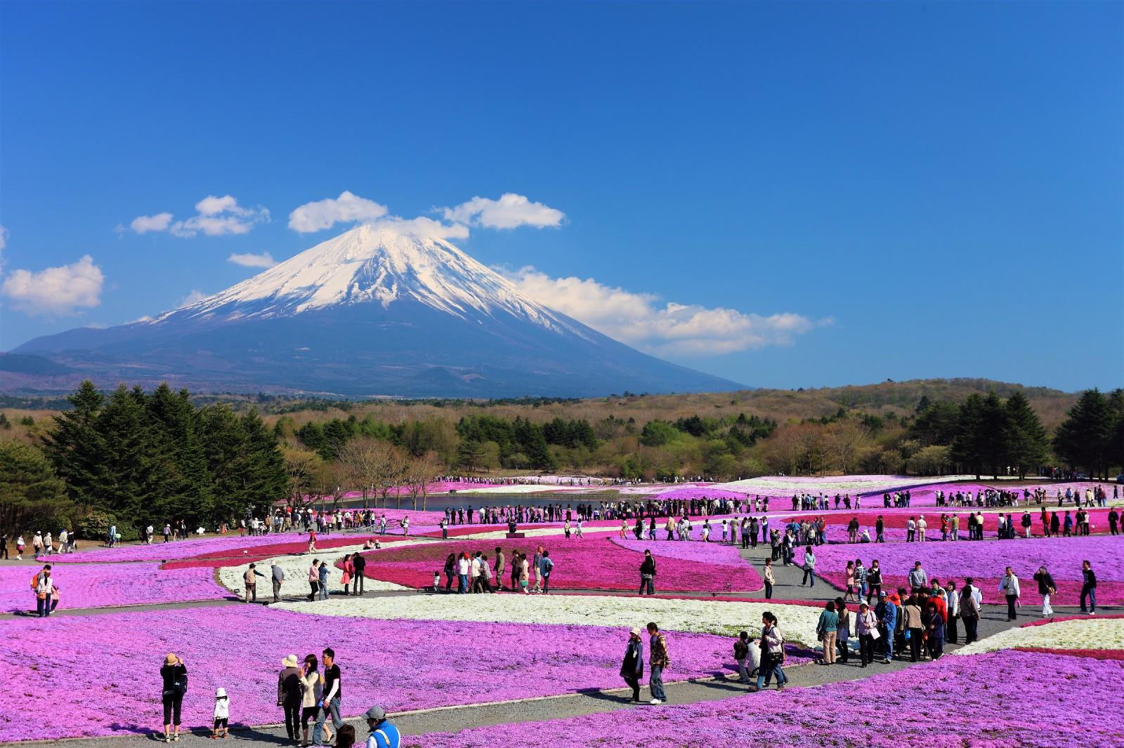 2021 Fuji Shibazakura Festival
