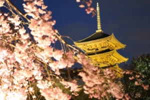 12 Best Places to See Cherry Blossoms in Kyoto