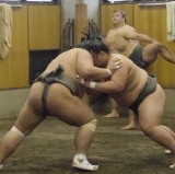 Tour to Sumo stable and watch Sumo morning training! - JapanWonderTravel.com