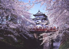 Best Spots to See Late Blooming Cherry Blossoms in Japan