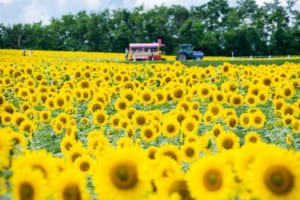 5 Best Flower Fields to Visit in Hokkaido