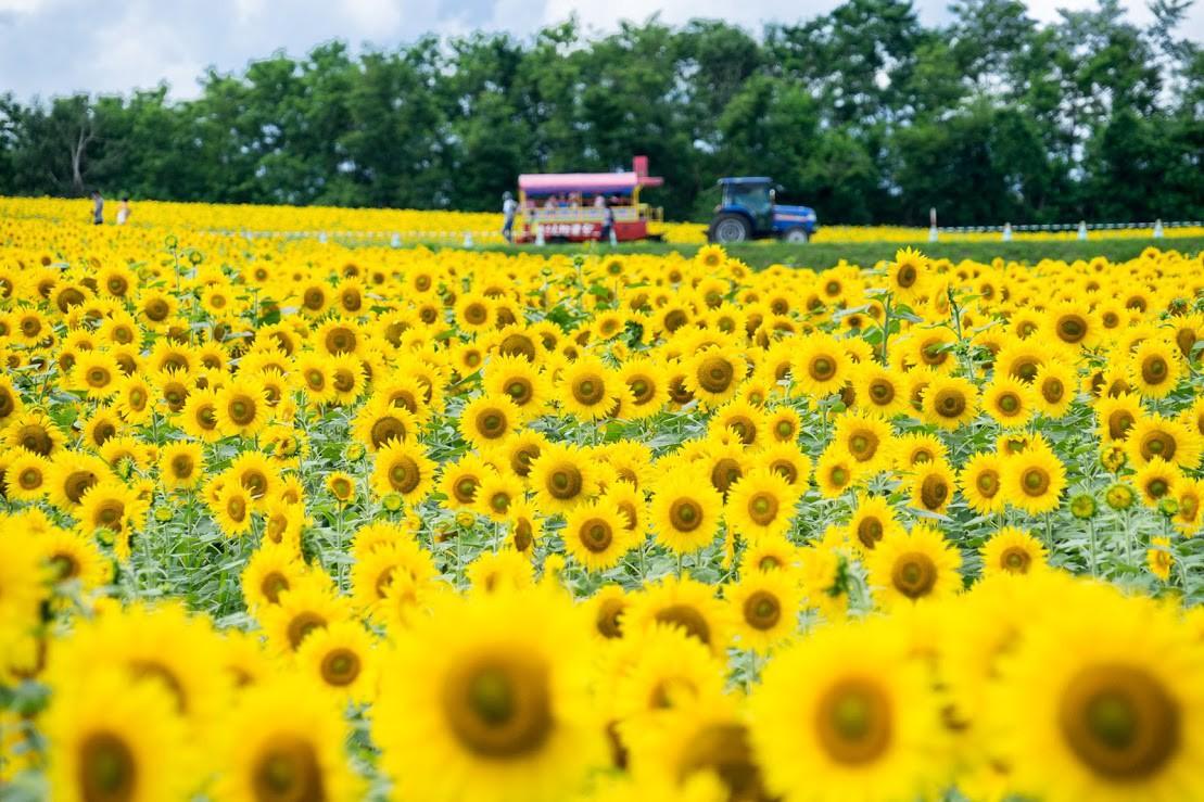 Best Flower fields in Hokkaido