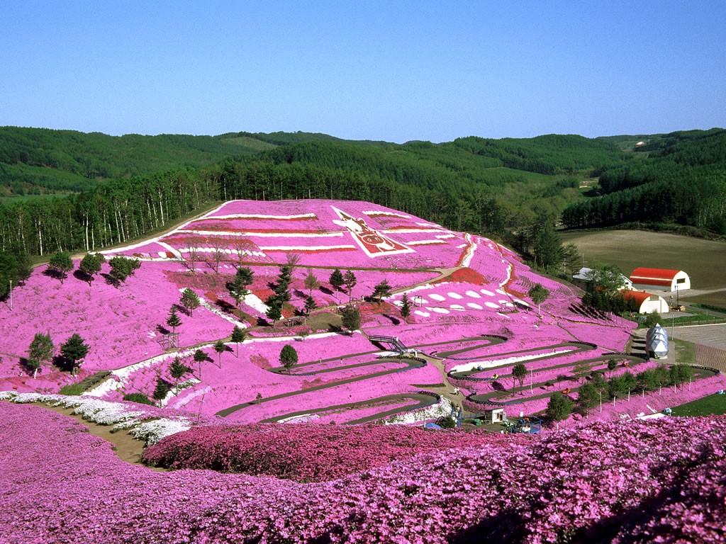 5 Best Flower Fields To Visit In Hokkaido Japan Web Magazine