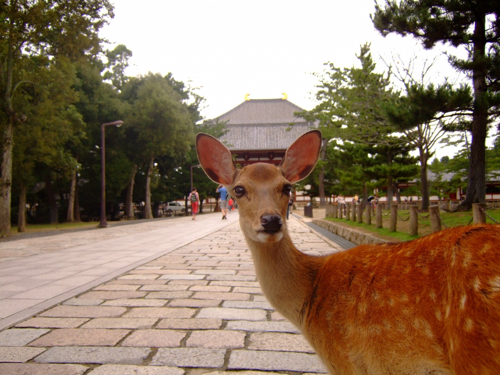 Nara : 10 Best Things to Do in 2019