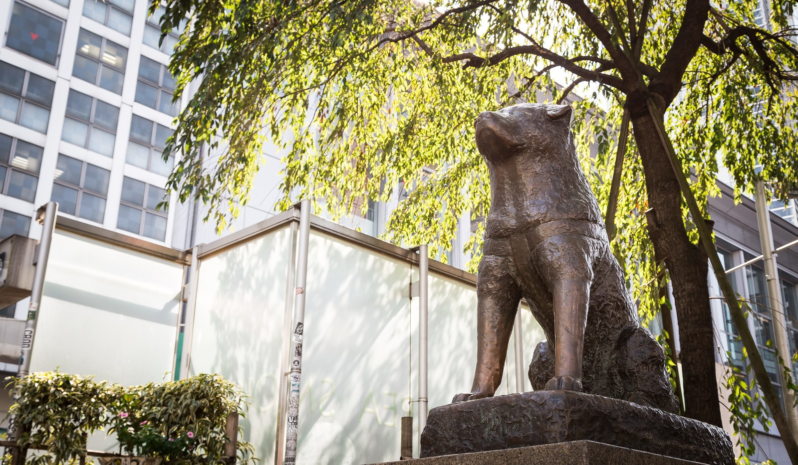 The iconic Hachiko Statue in front of Shibuya Station