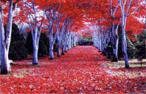 5 Best Autumn Leaves Spots in Hokkaido