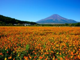 Top 10 Things to Do in Japan in September