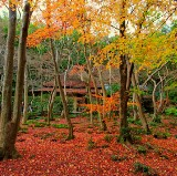 10 Best Autumn Leaves Spots in Kyoto