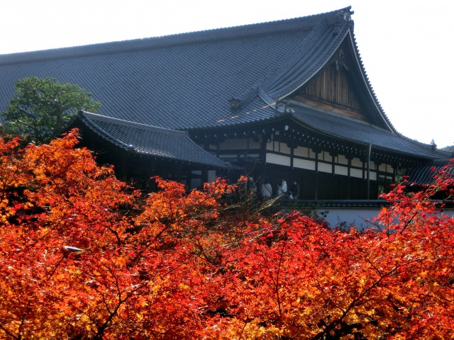 Autumn leaves at Tofukuji Temple in Kyoto
