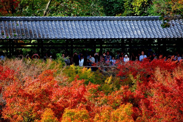 Tourists enjoying the astonishing view of autumn leaves at Tofukuji Temple