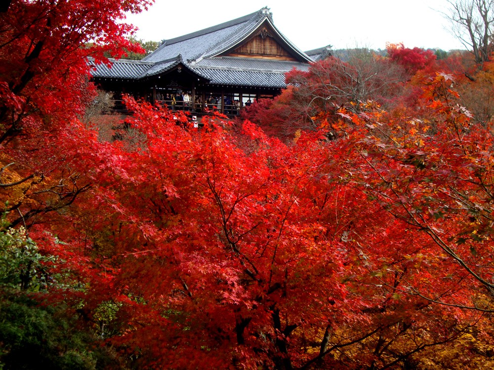 Tofukuji Temple: the Best Temple for Autumn Leaves Viewing in Kyoto!