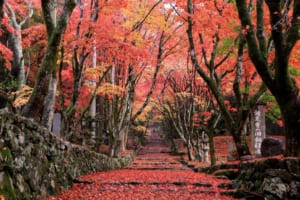 Keisokuji : Temple with the Most Gorgeous Red Carpet Approach