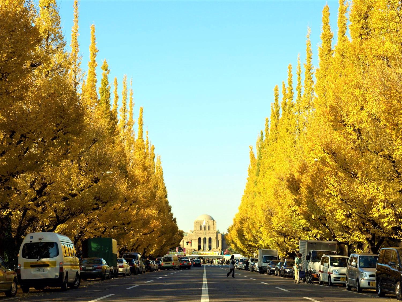 10 Best Autumn Leaves Spots in Tokyo 2020