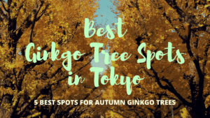 5 Best Spots to Enjoy Autumn Ginkgo Trees in Tokyo!
