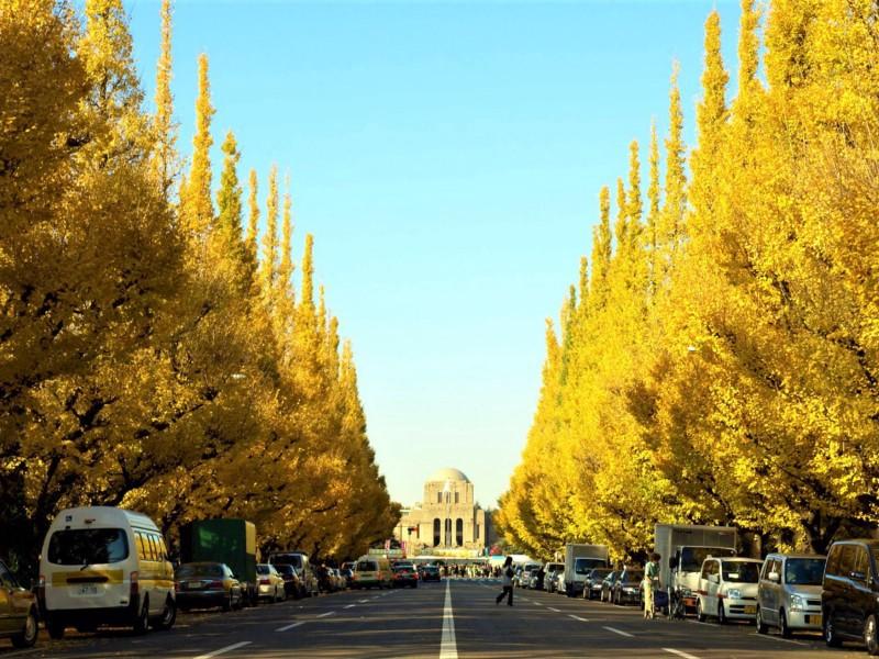 5 Best Spots to Enjoy Autumn Ginkgo Trees in Tokyo! - Japan