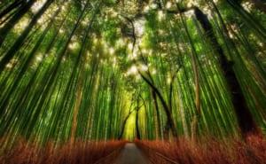 Kyoto Arashiyama and Sagano : 10 Best Things to Do