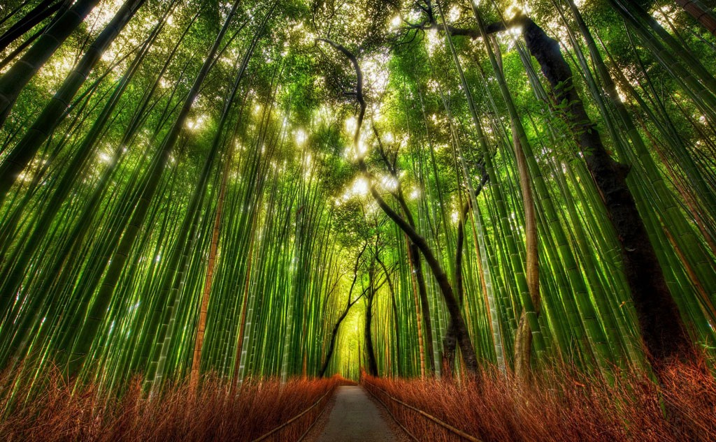 Kyoto Arashiyama and Sagano : 10 Best Things to Do in 2019
