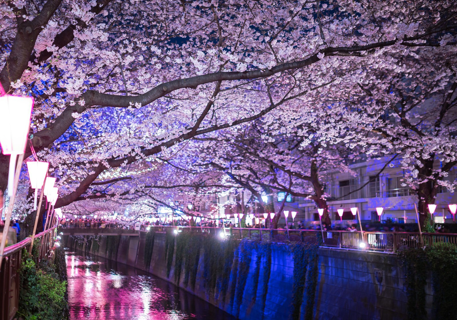 5 Best Cherry Blossom Festivals in Tokyo 2021