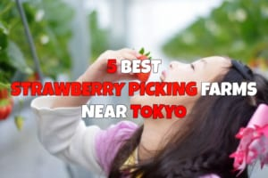 6 Best Strawberry Picking Farms near Tokyo
