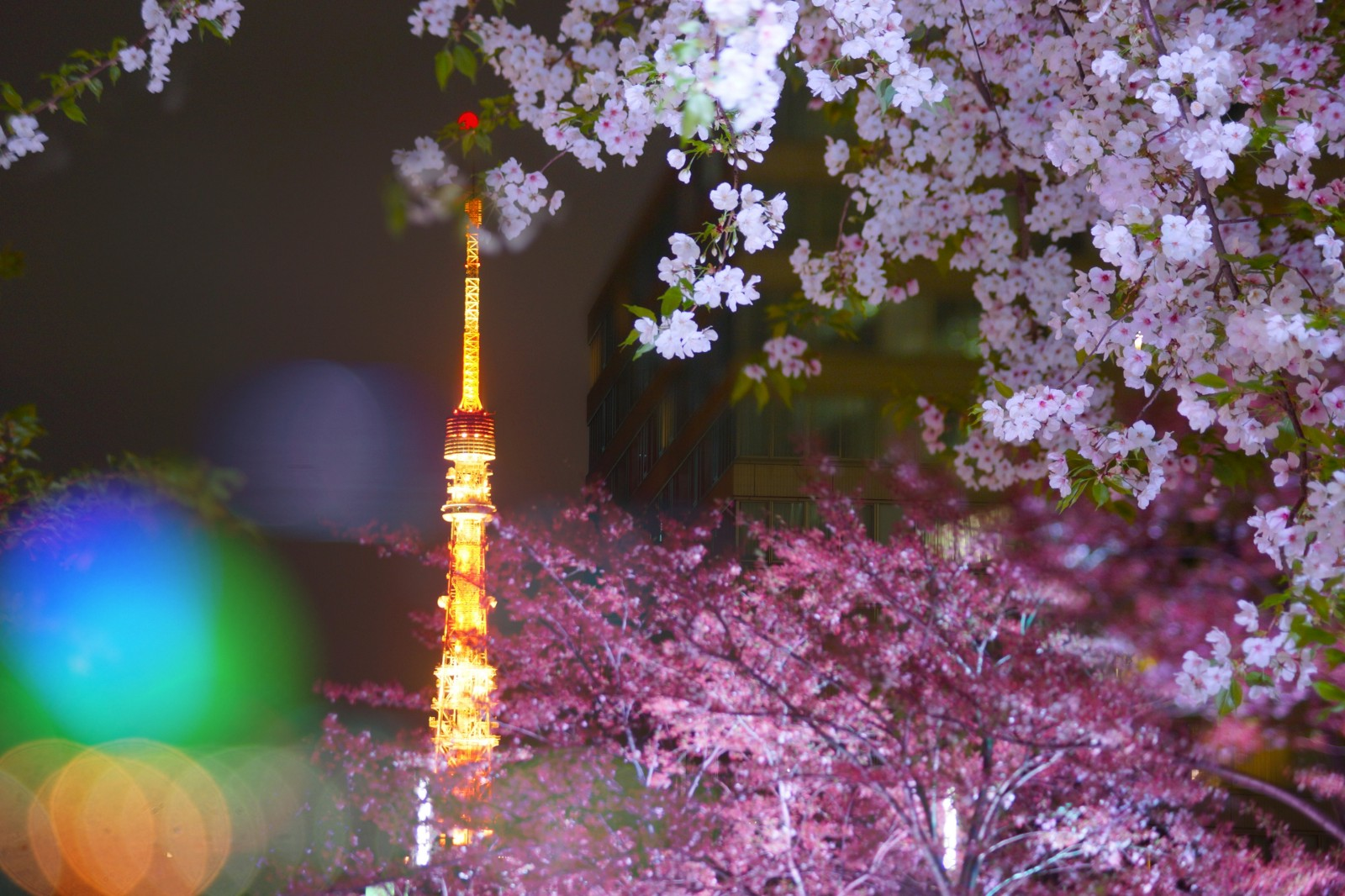 5 Best Places to See Night Cherry Blossoms in Tokyo 2020