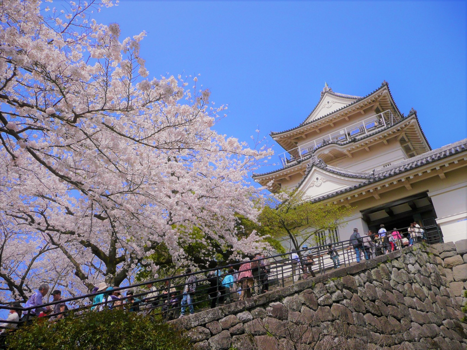 One Day Trips from Tokyo in Spring: Best Cherry Blossom Spots near Tokyo 2020