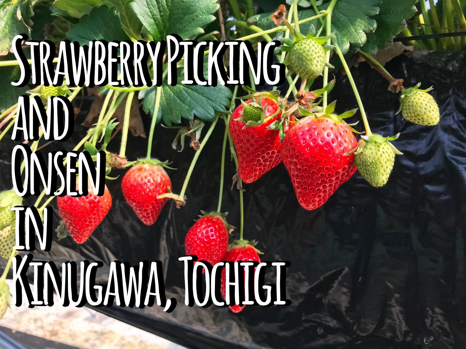 Kinugawa Onsen : Strawberry Picking & Onsen Trip!