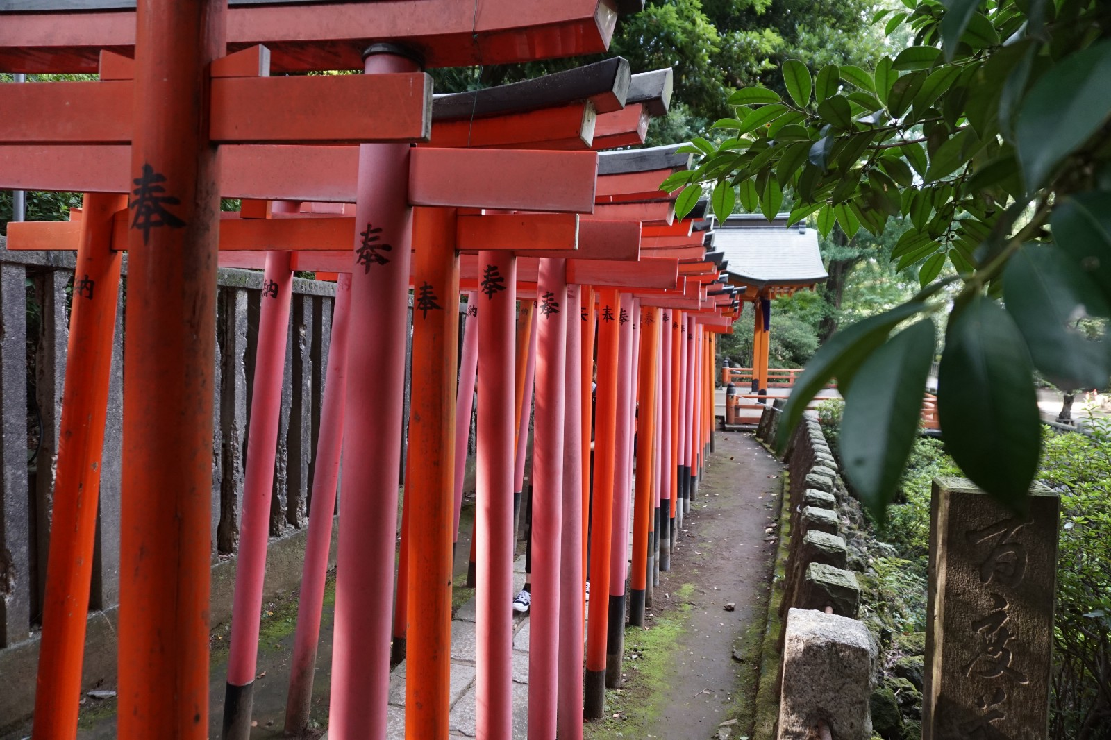 The torii gates tunnel at Nezu Shrine in Tokyo