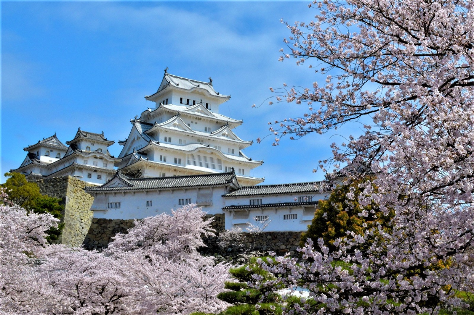 The glorious Himeji Castle with cherry blossoms in spring