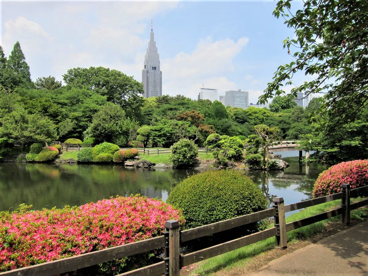 Shinjuku Gyoen featuring the traditional Japanese garden and modern skyscrapers on background