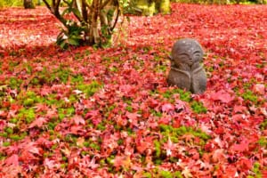 Autumn in Japan : 10 Best Things to Do