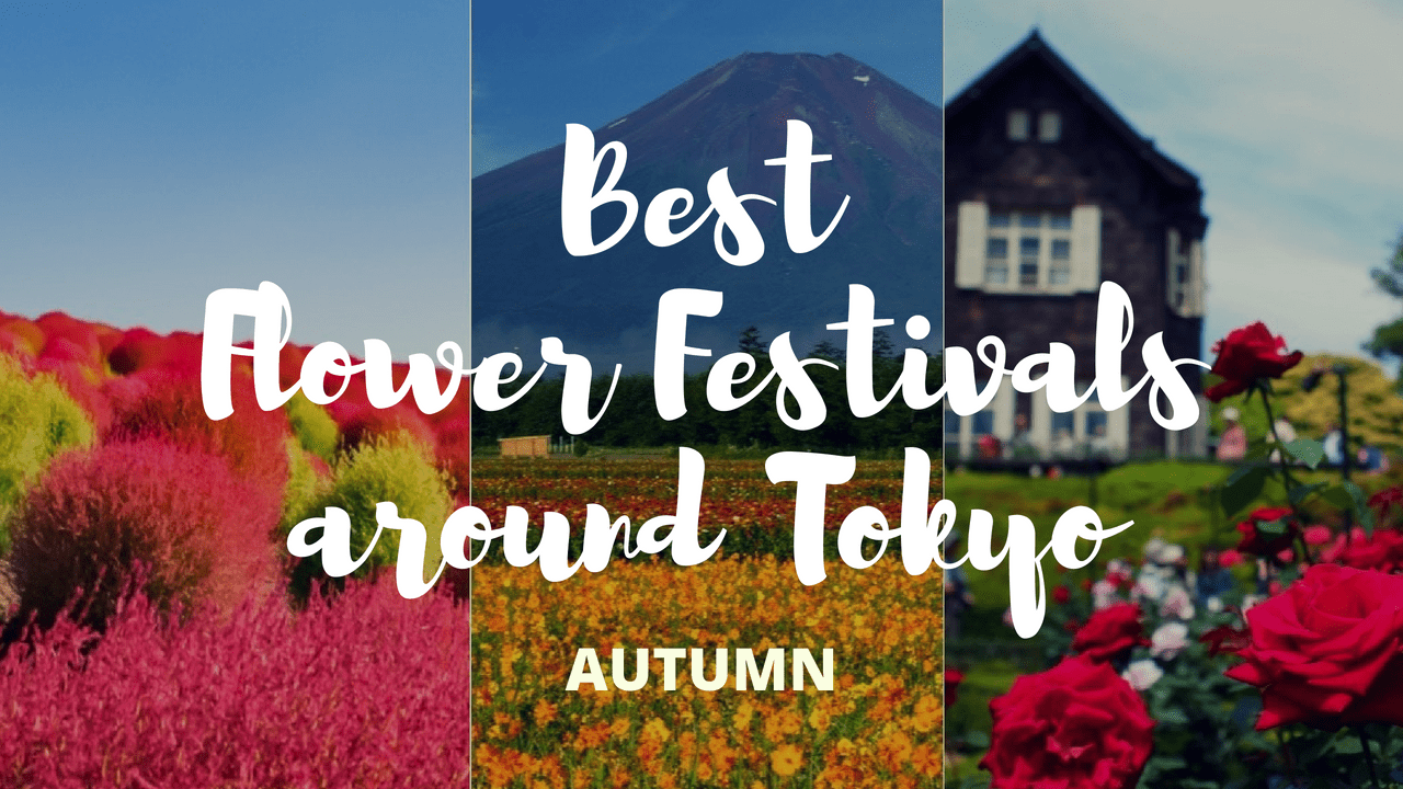 6 Must-Visit Flower Festivals around Tokyo in Autumn!