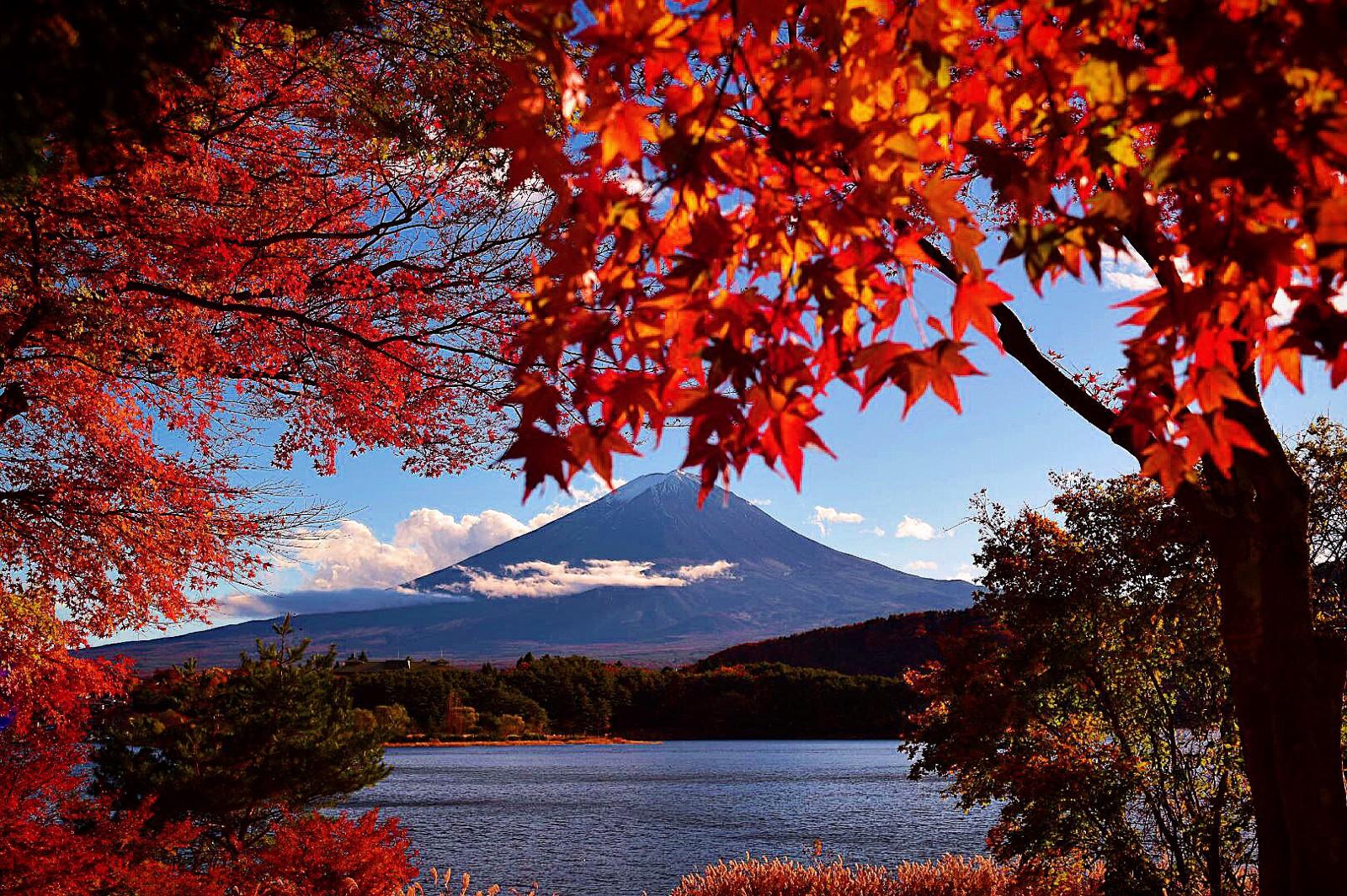 Fuji Kawaguchiko Autumn Leaves Festival 2019