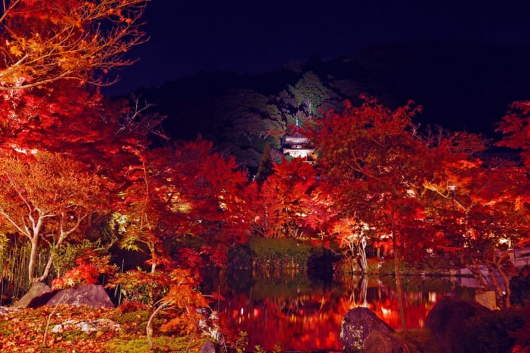 Autumn leaves with illumination at the temple in Kyoto